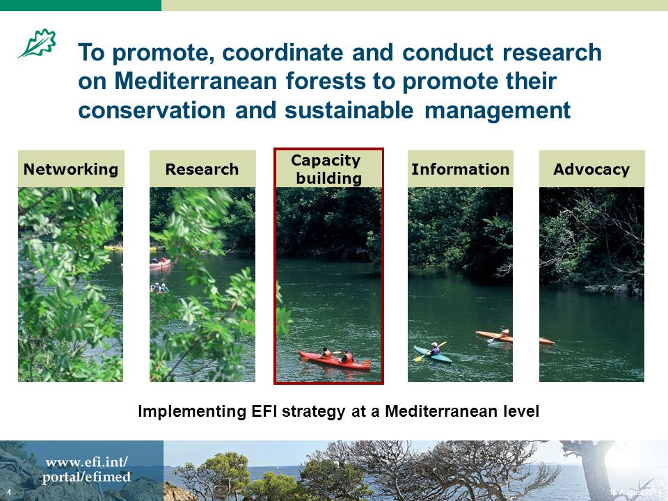 Strategic research topics NetworkingAdvocacyInformationResearch Capacity building Water and forests interactions and trade-offs: forest management and water resources Water and forests interactions and trade-offs: forest management and water resources Assessing the risk of forest fires and their socio-economic impact Assessing the risk of forest fires and their socio-economic impact Valuing and internalising non-market forest goods and services Valuing and internalising non-market forest goods and services Modelling Mediterranean forests, their products and services Multi-objective forest planning tools to address the multifunctionality of Mediterranean forests