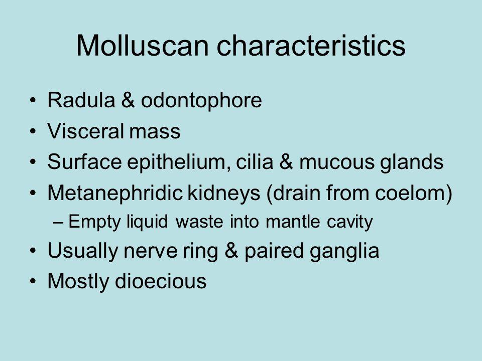 Phylum Mollusca Classes Caudofoveata & Solenogastres Class Monoplacophora—one shell plate Class Polyplacophora—8 shell plates Class Scaphopoda—tusk shells Class Gastropoda—snails & slugs Class Bivalvia—clams, mussels, etc.