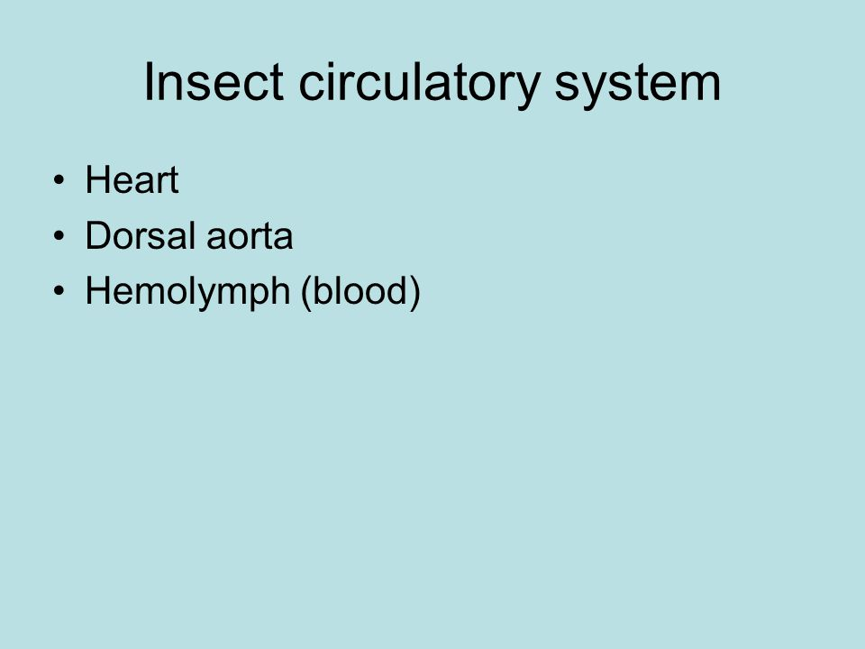 Insect circulatory system Heart Dorsal aorta Hemolymph (blood)