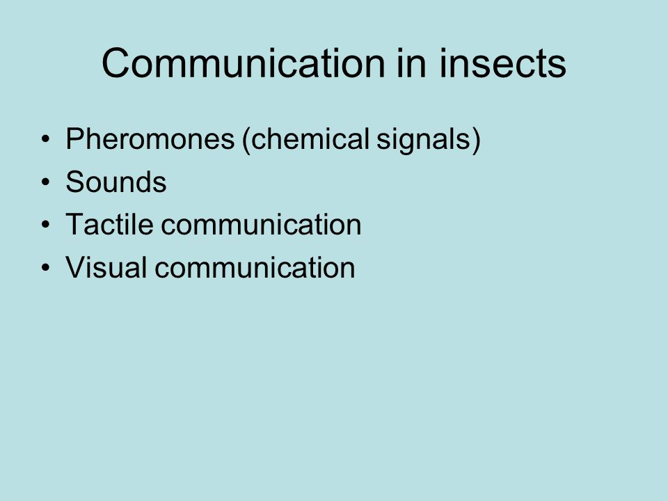Communication in insects Pheromones (chemical signals) Sounds Tactile communication Visual communication