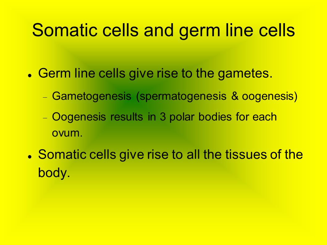 Somatic cells and germ line cells Germ line cells give rise to the gametes.  Gametogenesis (spermatogenesis & oogenesis)  Oogenesis results in 3 po