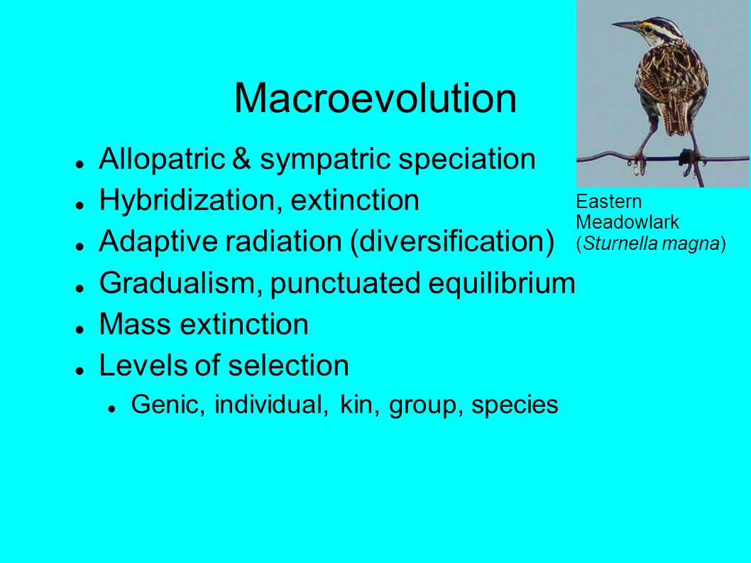 Macroevolution Allopatric & sympatric speciation Hybridization, extinction Adaptive radiation (diversification) Gradualism, punctuated equilibrium Mass extinction Levels of selection Genic, individual, kin, group, species Eastern Meadowlark (Sturnella magna)