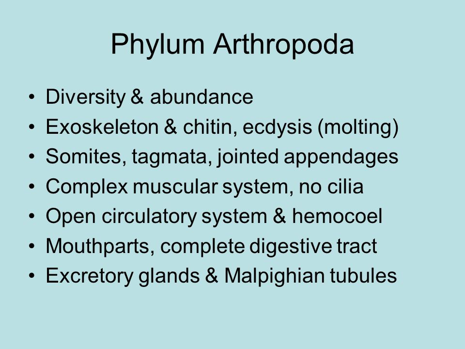 Phylum Arthropoda Diversity & abundance Exoskeleton & chitin, ecdysis (molting) Somites, tagmata, jointed appendages Complex muscular system, no cilia Open circulatory system & hemocoel Mouthparts, complete digestive tract Excretory glands & Malpighian tubules