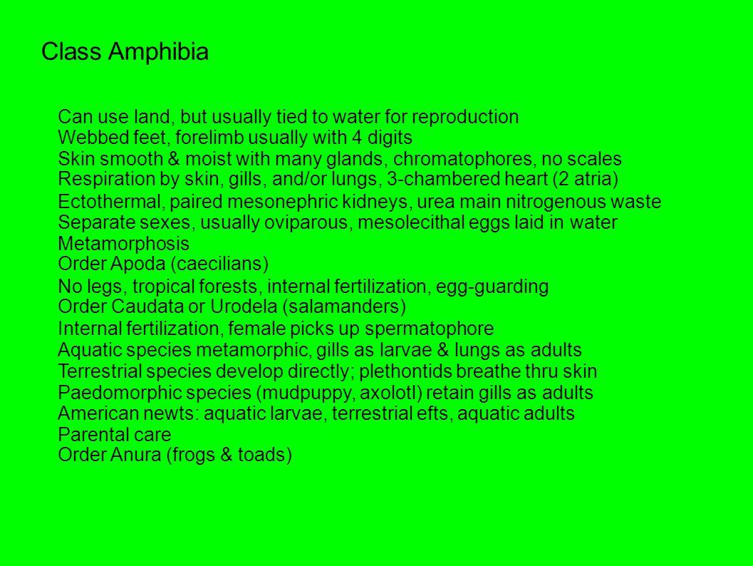 Vocalization External fertilization during amplexus Egg, tadpole stages, adult Family Ranidae Bullfrog, leopard frog, etc.