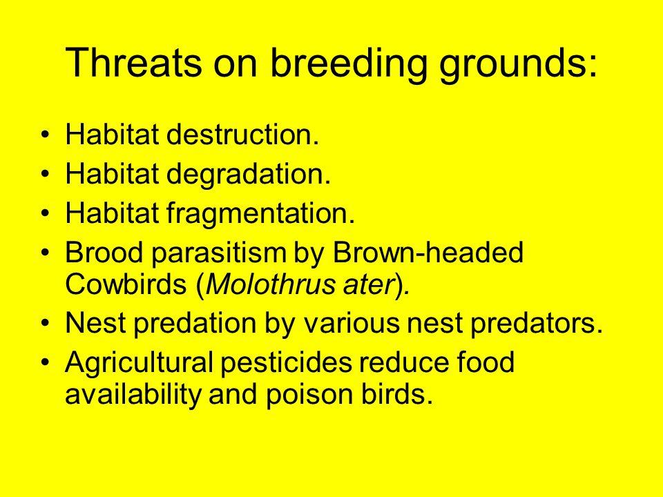 Threats on breeding grounds: Habitat destruction. Habitat degradation. Habitat fragmentation. Brood parasitism by Brown-headed Cowbirds (Molothrus ate