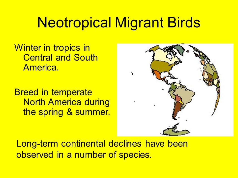 Neotropical Migrant Birds Winter in tropics in Central and South America. Breed in temperate North America during the spring & summer. Long-term conti