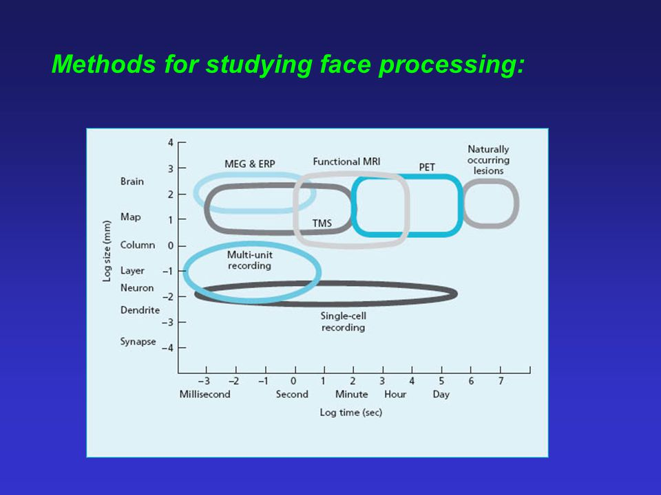 Methods for studying face processing: