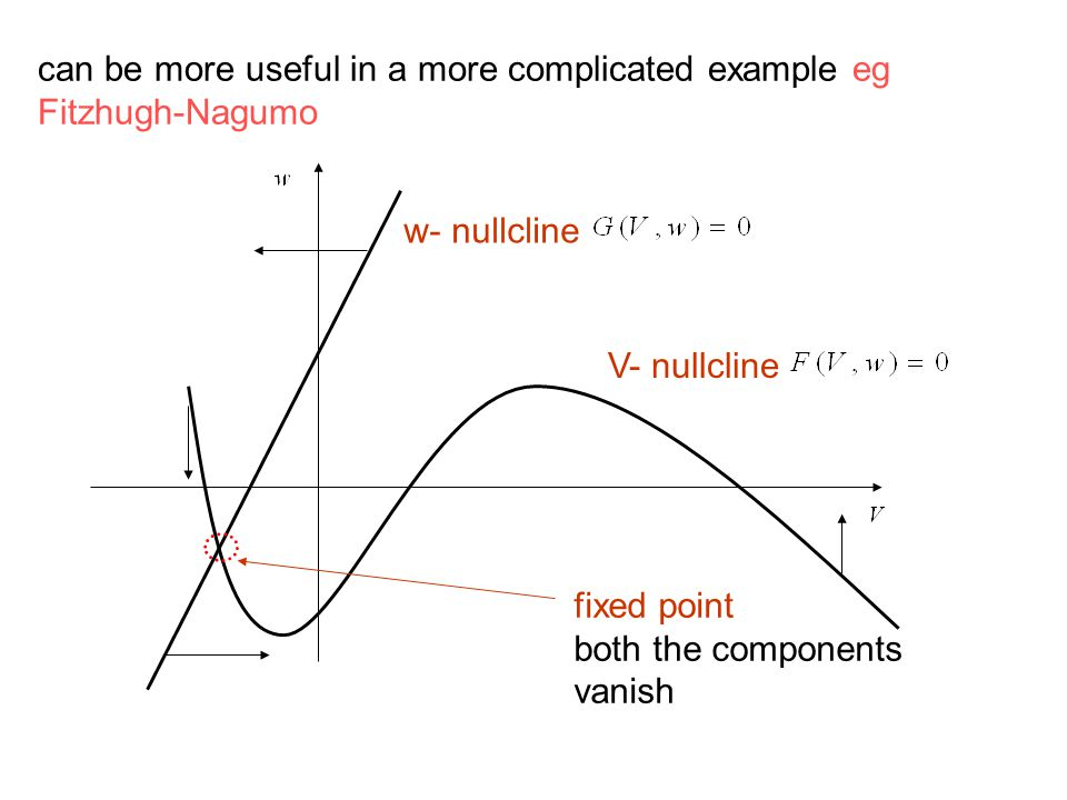 fixed point both the components vanish w- nullcline V- nullcline can be more useful in a more complicated example eg Fitzhugh-Nagumo