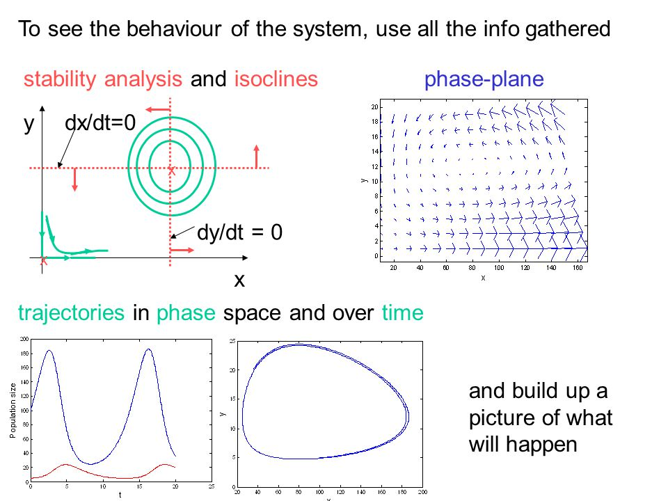 To see the behaviour of the system, use all the info gathered x x x ydx/dt=0 dy/dt = 0 stability analysis and isoclinesphase-plane trajectories in pha