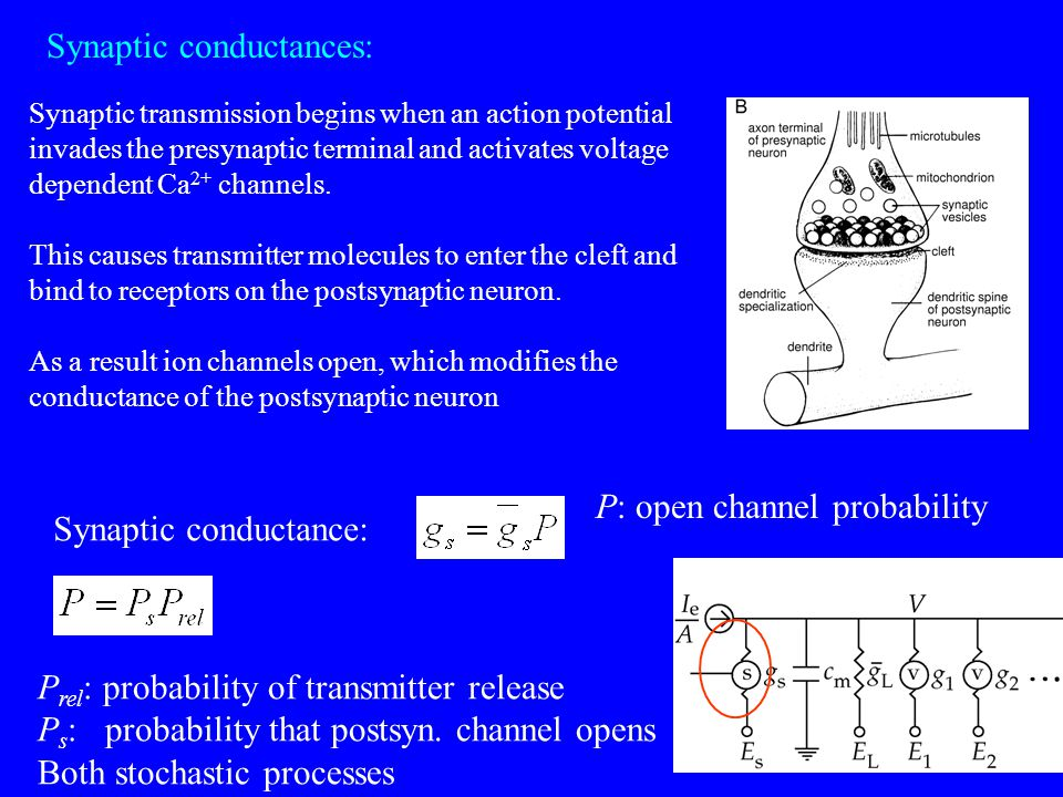 Postsynaptic conductance: closing rate of the channel opening rate dependent on transmitter conc Spike ignore during the opening process