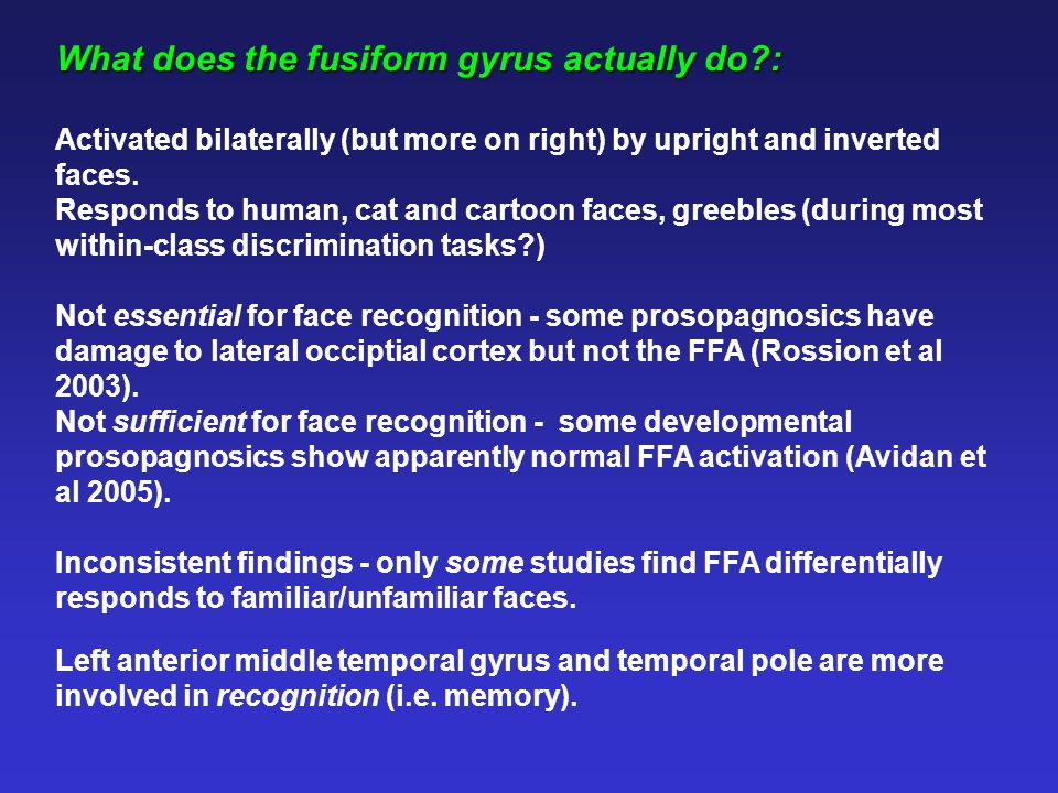 What does the fusiform gyrus actually do : Activated bilaterally (but more on right) by upright and inverted faces.