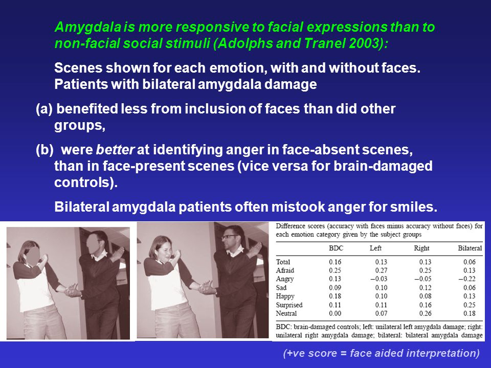 Amygdala is more responsive to facial expressions than to non-facial social stimuli (Adolphs and Tranel 2003): Scenes shown for each emotion, with and