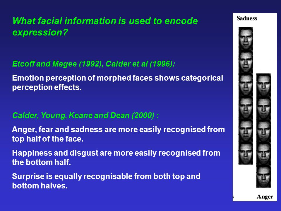 What facial information is used to encode expression? Etcoff and Magee (1992), Calder et al (1996): Emotion perception of morphed faces shows categori