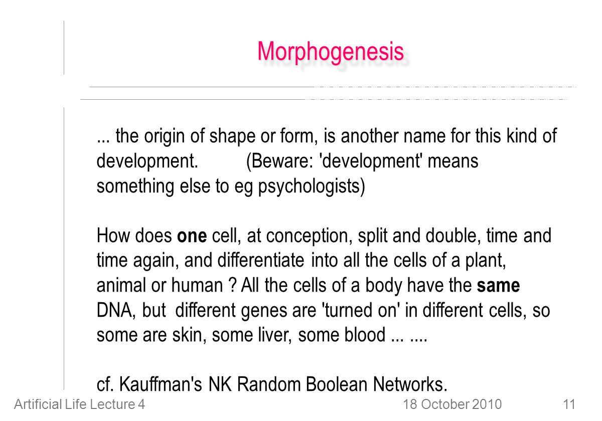 18 October 2010Artificial Life Lecture 411 MorphogenesisMorphogenesis...
