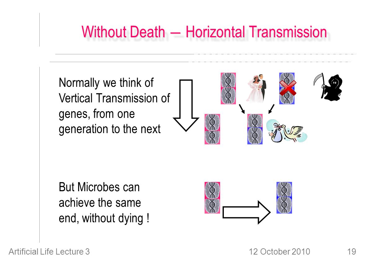 12 October 2010Artificial Life Lecture 319 Without Death ― Horizontal Transmission Normally we think of Vertical Transmission of genes, from one gener