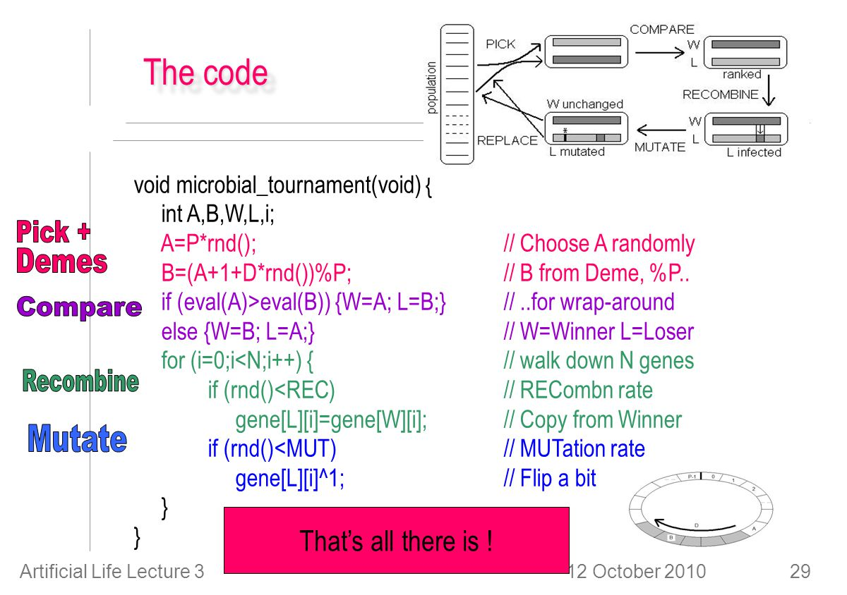 12 October 2010Artificial Life Lecture 329 The code void microbial_tournament(void) { int A,B,W,L,i; A=P*rnd(); // Choose A randomly B=(A+1+D*rnd())%P; // B from Deme, %P..