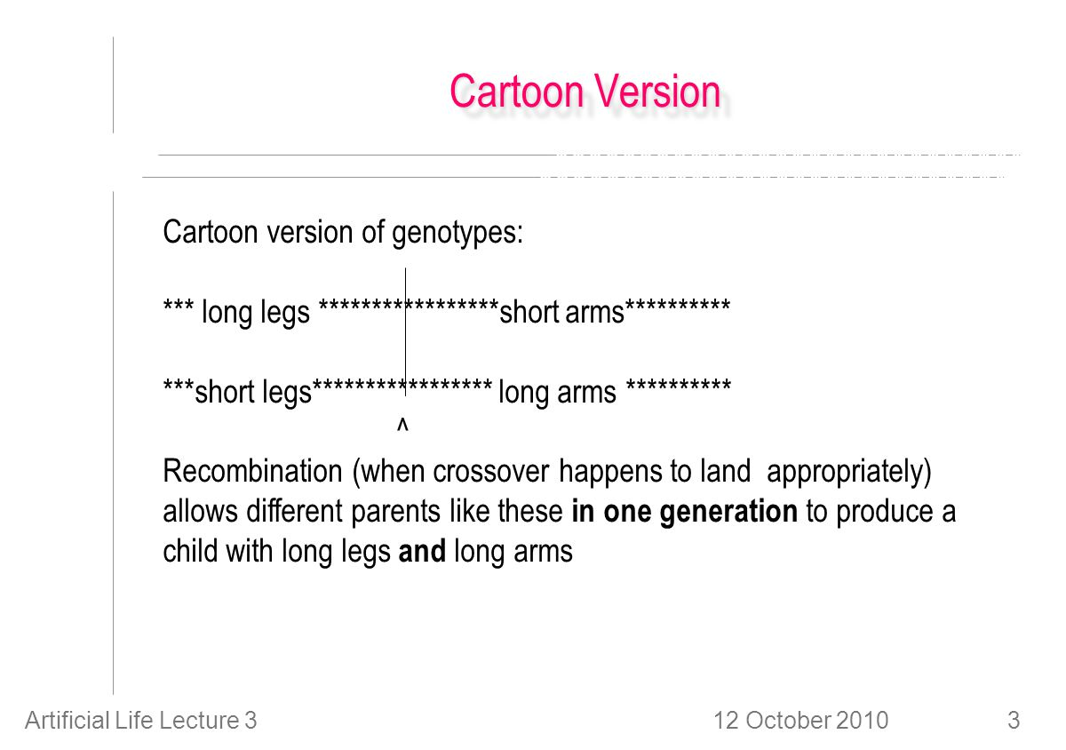 12 October 2010Artificial Life Lecture 33 Cartoon Version Cartoon version of genotypes: *** long legs *****************short arms********** ***short legs***************** long arms ********** ^ Recombination (when crossover happens to land appropriately) allows different parents like these in one generation to produce a child with long legs and long arms