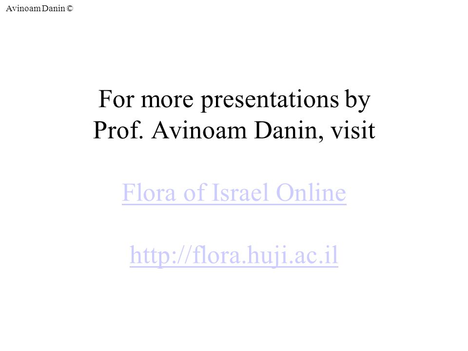 Avinoam Danin © For more presentations by Prof.