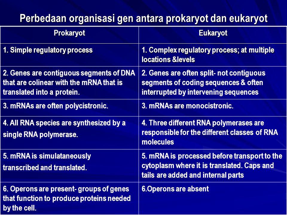 Perbedaan organisasi gen antara prokaryot dan eukaryot ProkaryotEukaryot 1. Simple regulatory process 1. Complex regulatory process; at multiple locat