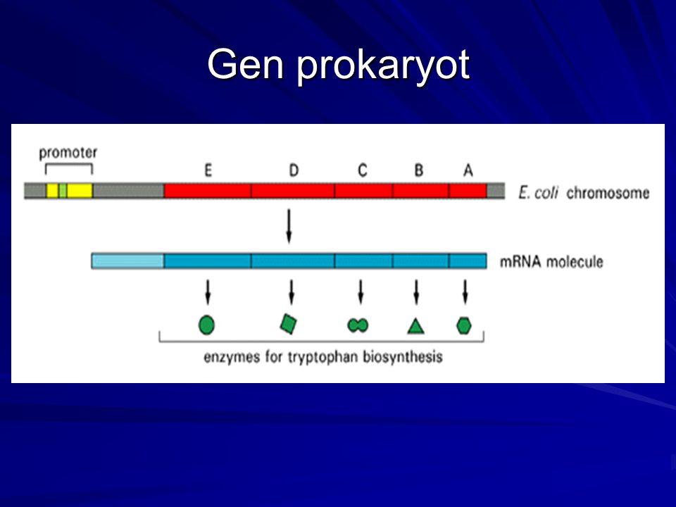 Gen prokaryot