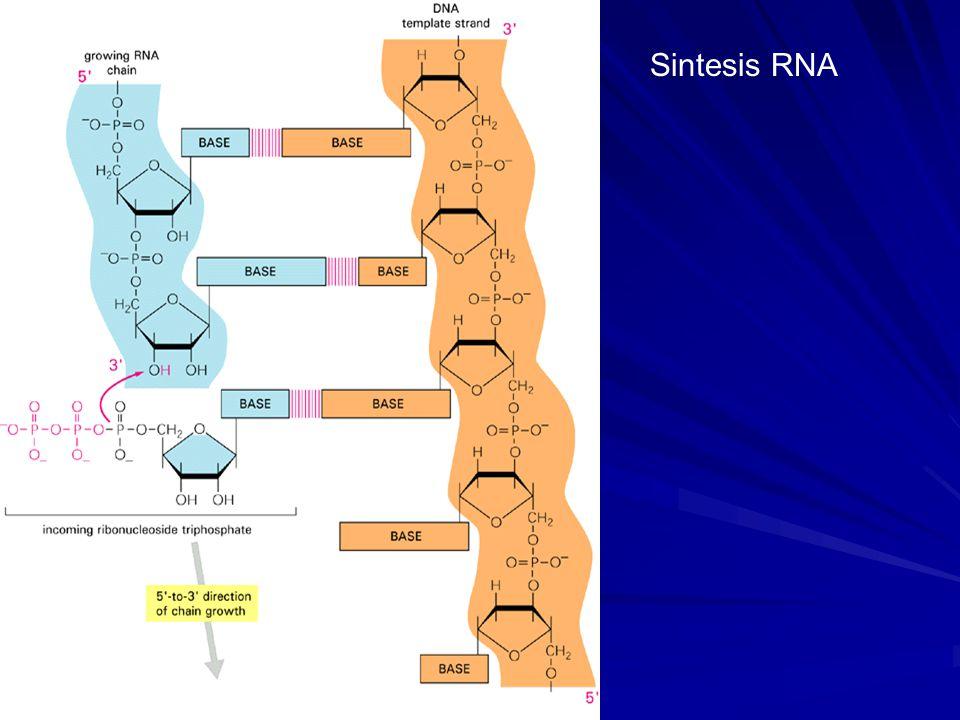 Sintesis RNA
