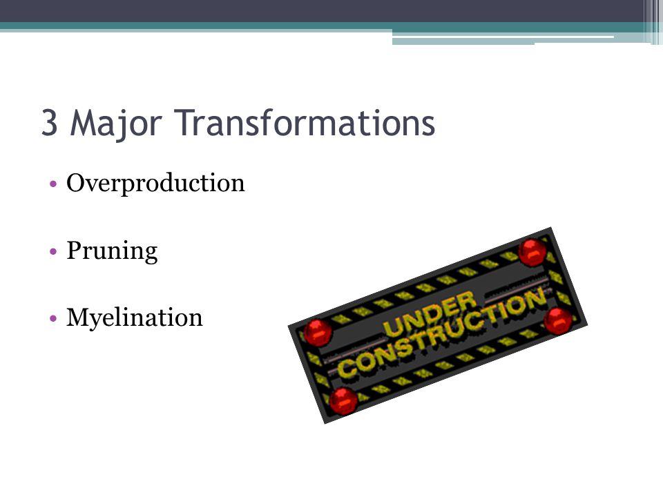3 Major Transformations Overproduction Pruning Myelination