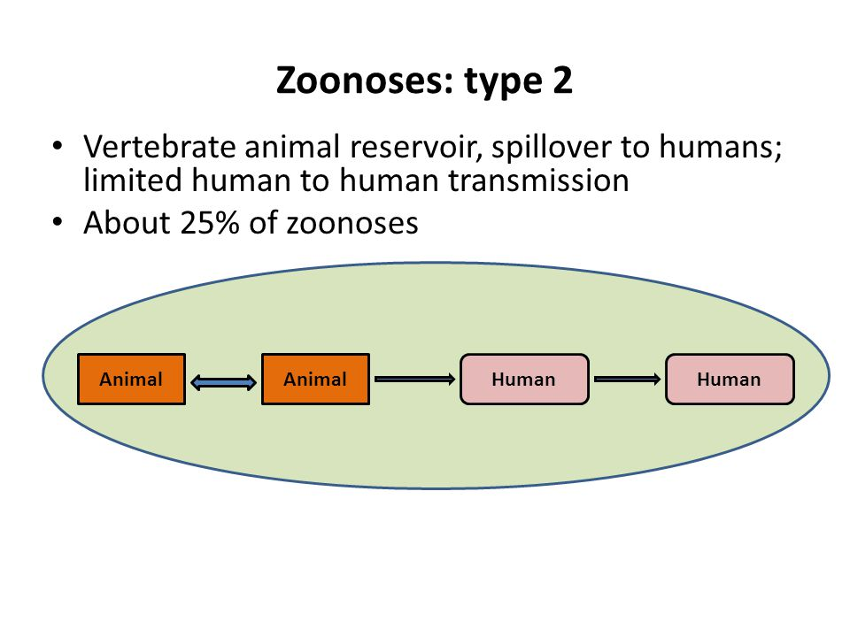 Zoonoses: type 2 Vertebrate animal reservoir, spillover to humans; limited human to human transmission About 25% of zoonoses AnimalHumanAnimalHuman