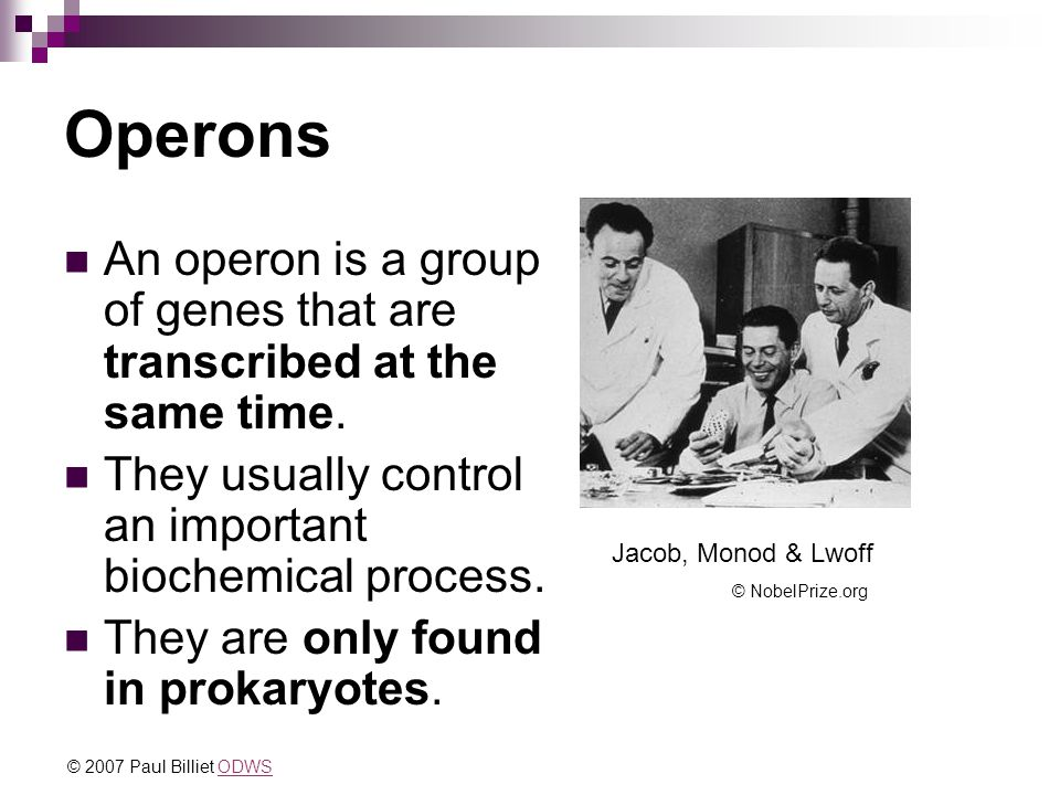 Operons An operon is a group of genes that are transcribed at the same time. They usually control an important biochemical process. They are only foun