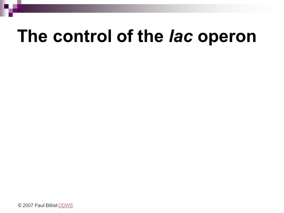 The control of the lac operon © 2007 Paul Billiet ODWSODWS
