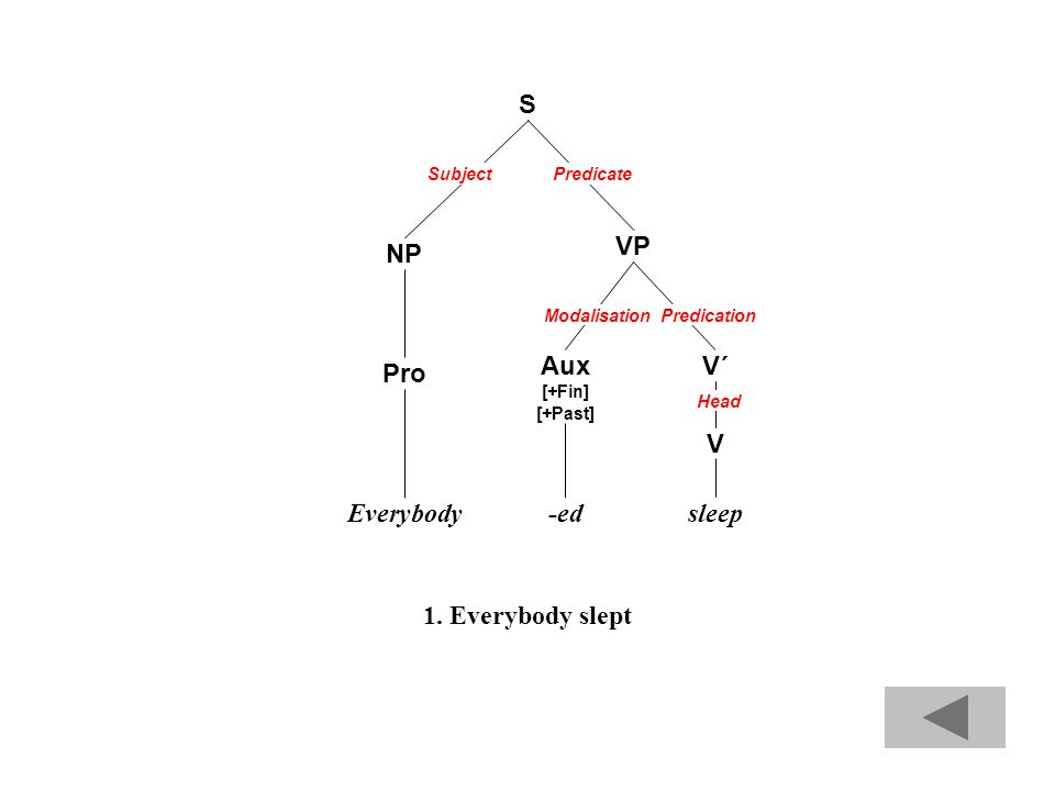 S NP VP Pro V Everybodysleep V´Aux [+Fin] [+Past] -ed Subject Predication Head Modalisation Predicate 1.