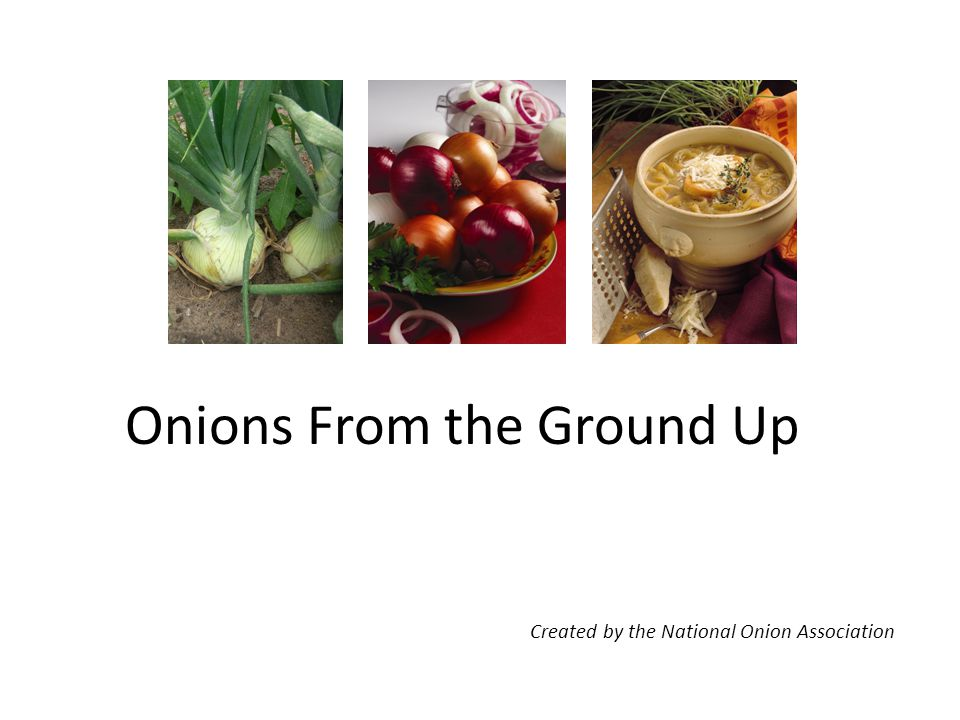Onions From the Ground Up Created by the National Onion Association