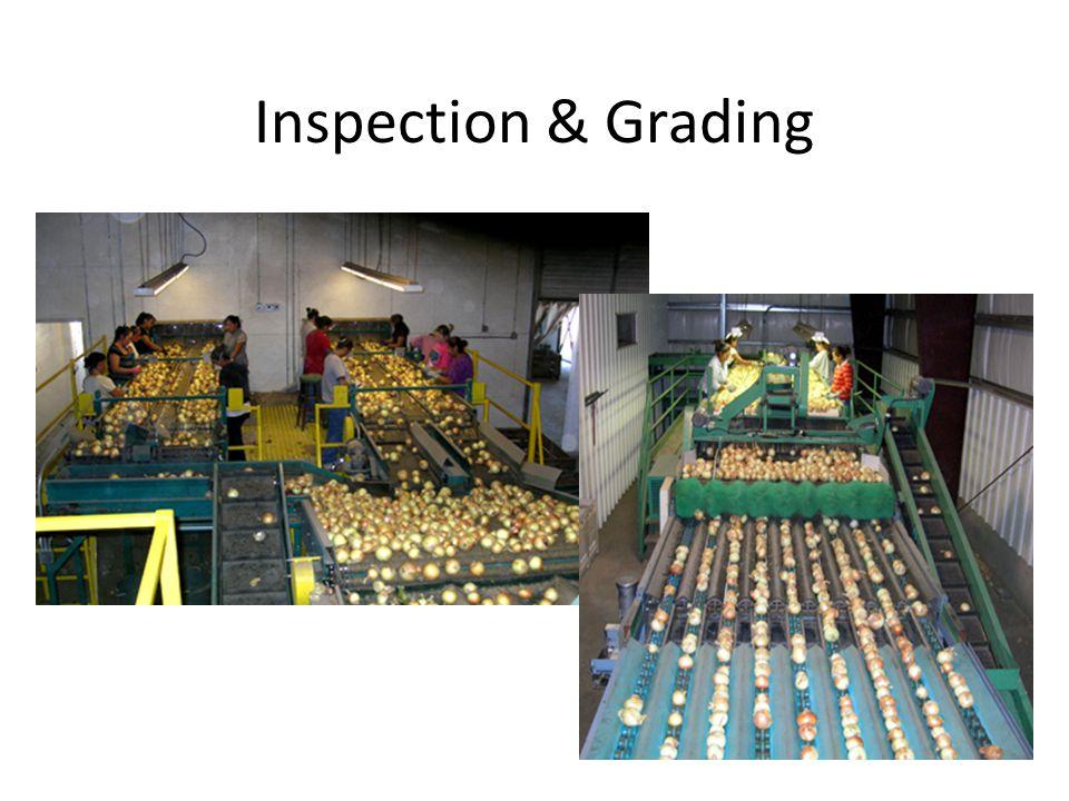 Inspection & Grading