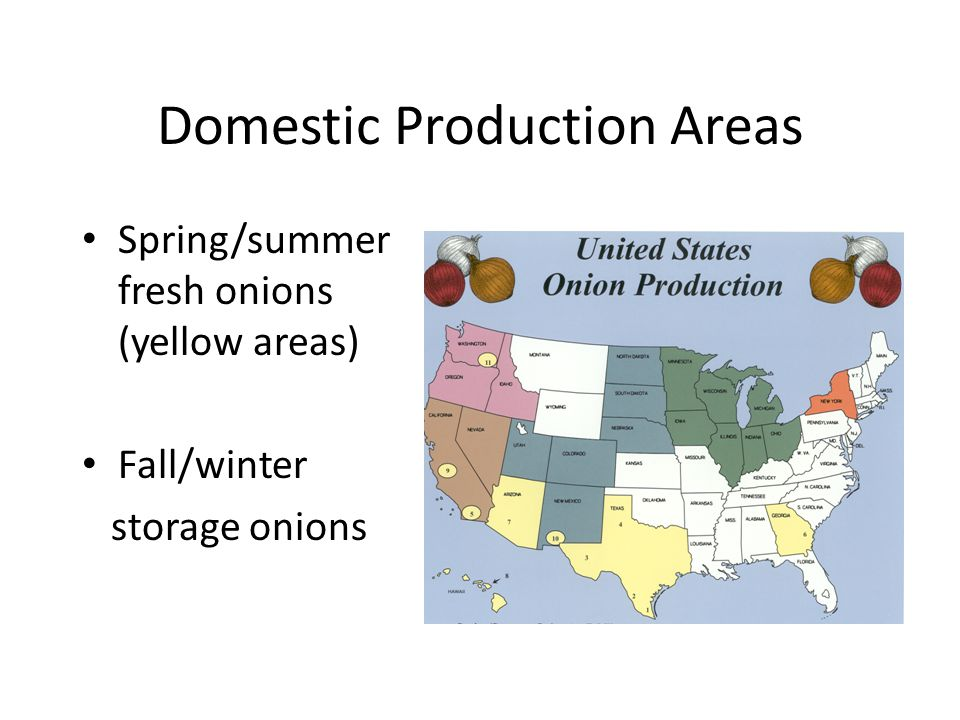 Domestic Production Areas Spring/summer fresh onions (yellow areas) Fall/winter storage onions