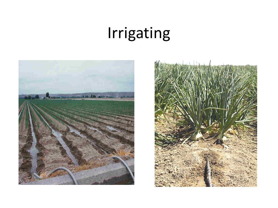 Irrigating