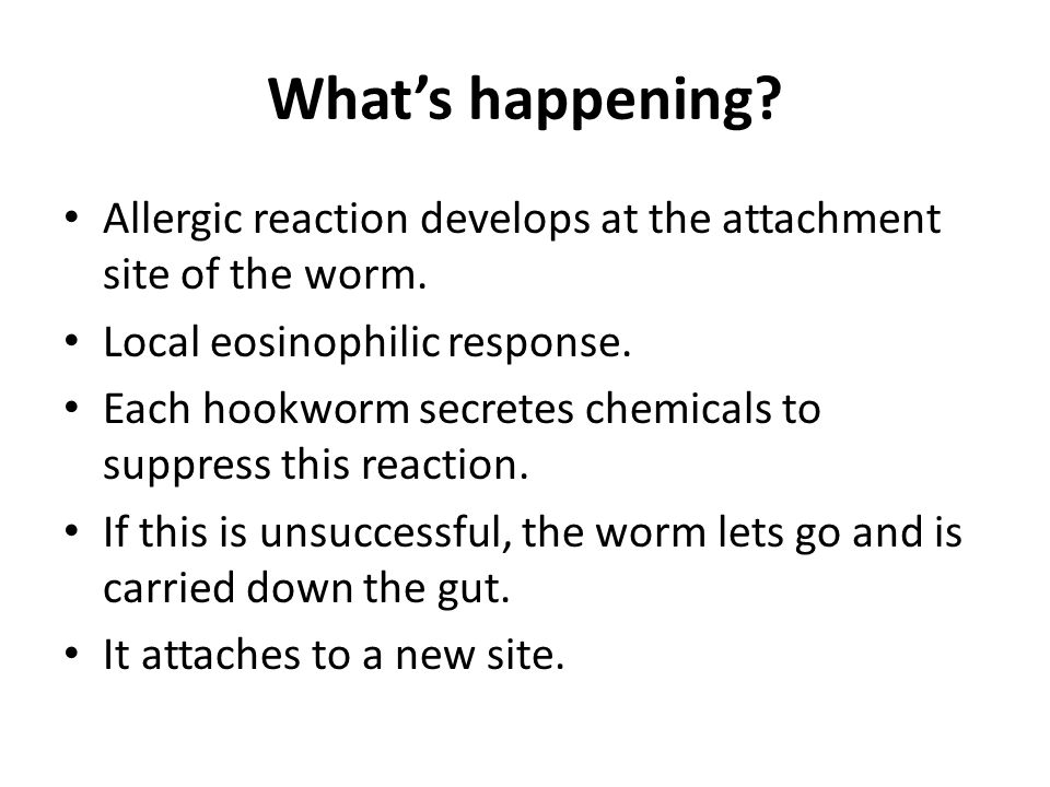 What's happening. Allergic reaction develops at the attachment site of the worm.
