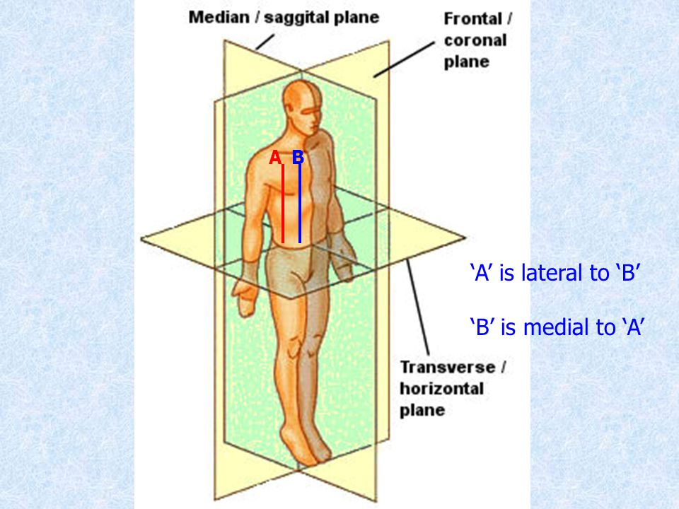 'A' is lateral to 'B' 'B' is medial to 'A' AB