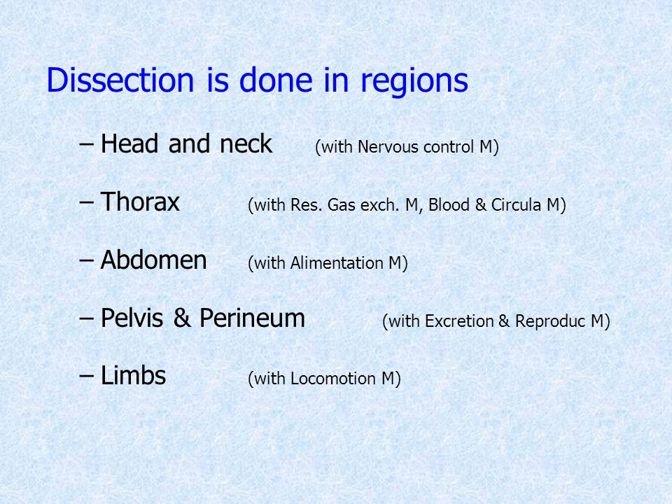 Dissection is done in regions –Head and neck (with Nervous control M) –Thorax (with Res. Gas exch. M, Blood & Circula M) –Abdomen (with Alimentation M