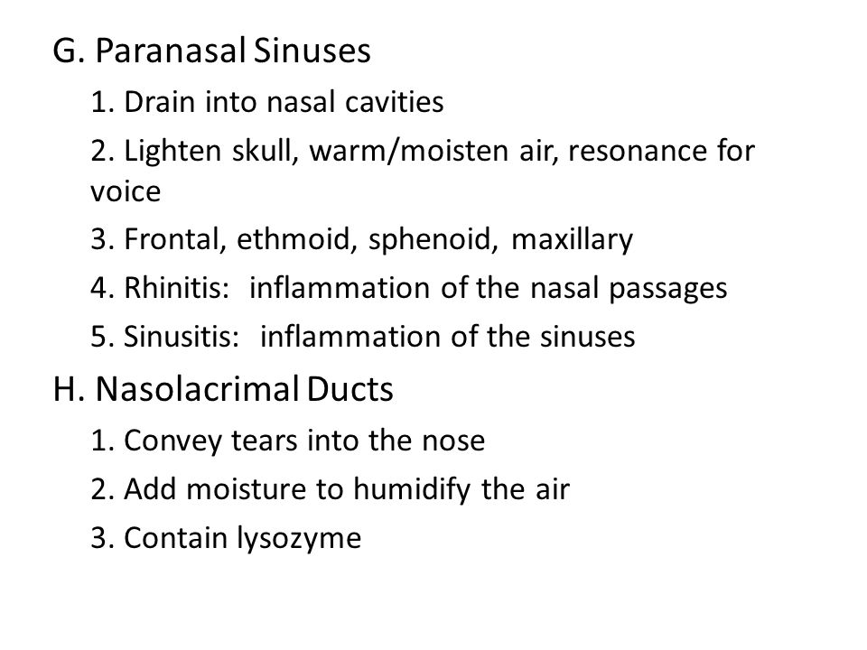 G. Paranasal Sinuses 1. Drain into nasal cavities 2. Lighten skull, warm/moisten air, resonance for voice 3. Frontal, ethmoid, sphenoid, maxillary 4.