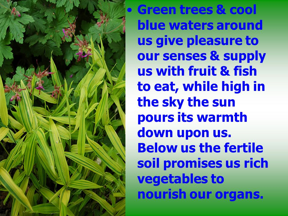 Green trees & cool blue waters around us give pleasure to our senses & supply us with fruit & fish to eat, while high in the sky the sun pours its war