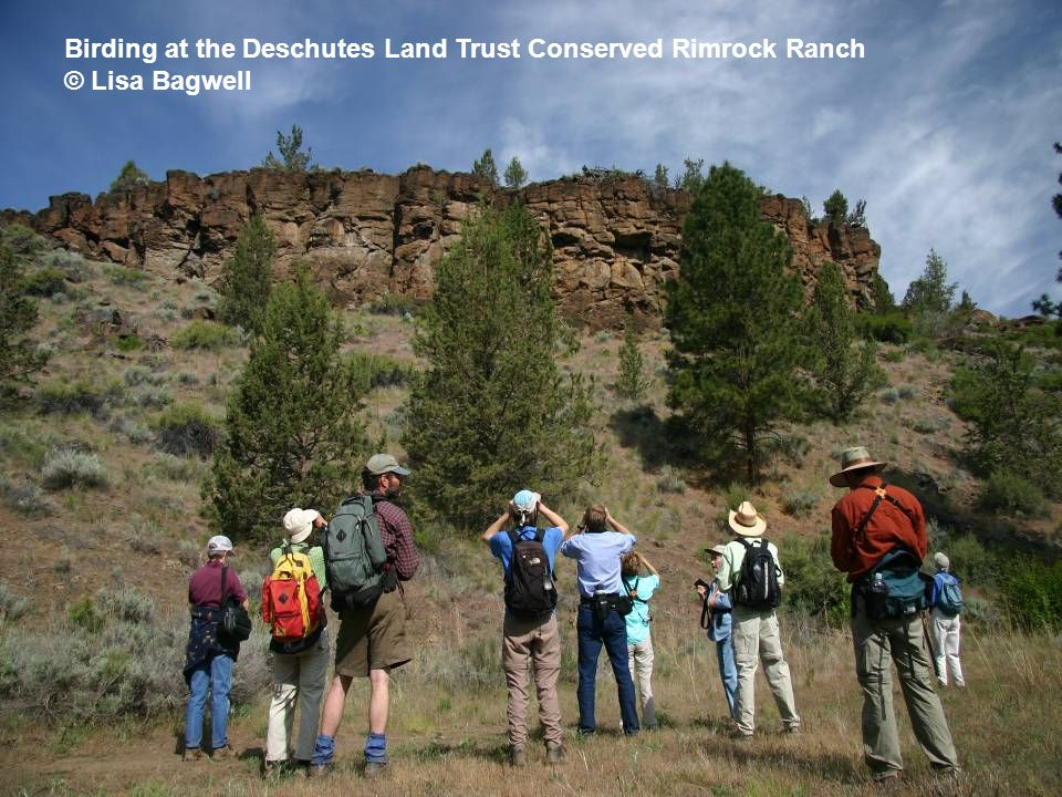 Birding at the Deschutes Land Trust Conserved Rimrock Ranch © Lisa Bagwell