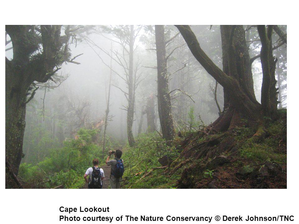 Cape Lookout Photo courtesy of The Nature Conservancy © Derek Johnson/TNC