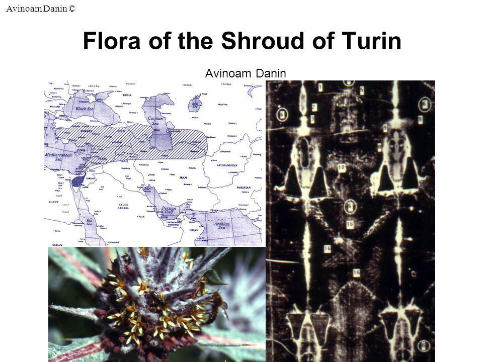 Avinoam Danin © Flora of the Shroud of Turin Avinoam Danin