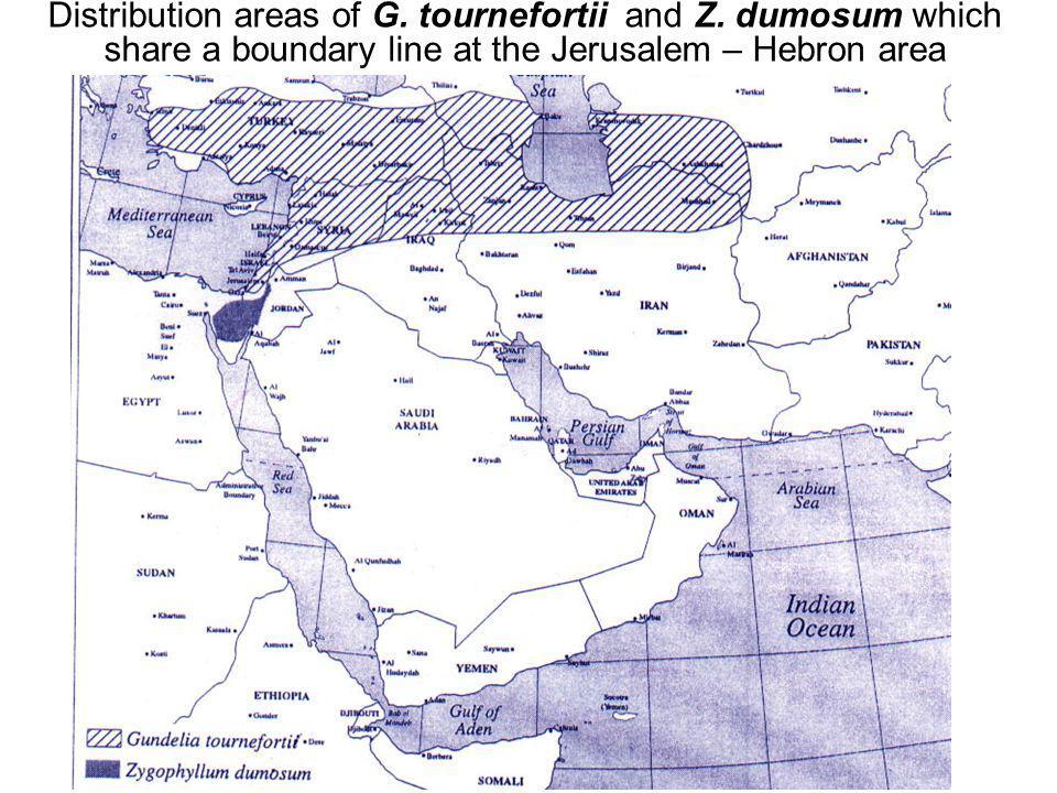 Avinoam Danin © Distribution areas of G. tournefortii and Z.