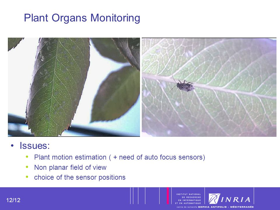 12 12/12 Plant Organs Monitoring Issues: Plant motion estimation ( + need of auto focus sensors) Non planar field of view choice of the sensor positio