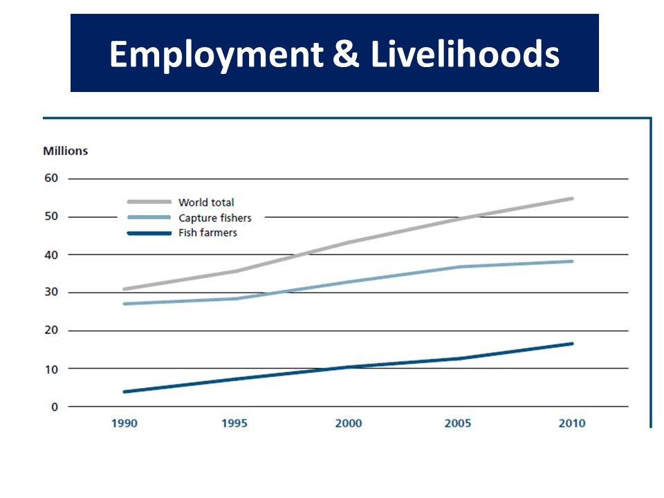 Employment & Livelihoods