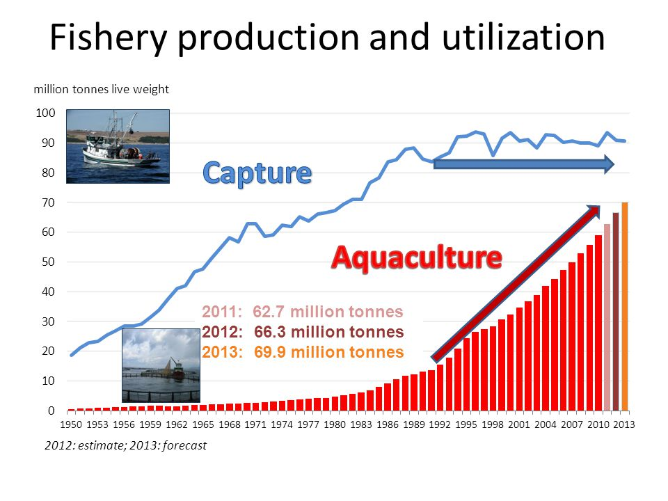 Fishery production and utilization 2011: 62.7 million tonnes 2012: 66.3 million tonnes 2013: 69.9 million tonnes million tonnes live weight 2012: estimate; 2013: forecast