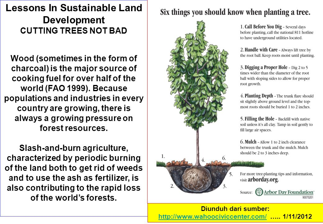 Lessons In Sustainable Land Development CUTTING TREES NOT BAD Wood (sometimes in the form of charcoal) is the major source of cooking fuel for over half of the world (FAO 1999).