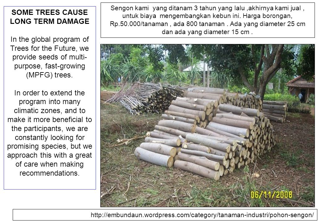 SOME TREES CAUSE LONG TERM DAMAGE In the global program of Trees for the Future, we provide seeds of multi- purpose, fast-growing (MPFG) trees. In ord