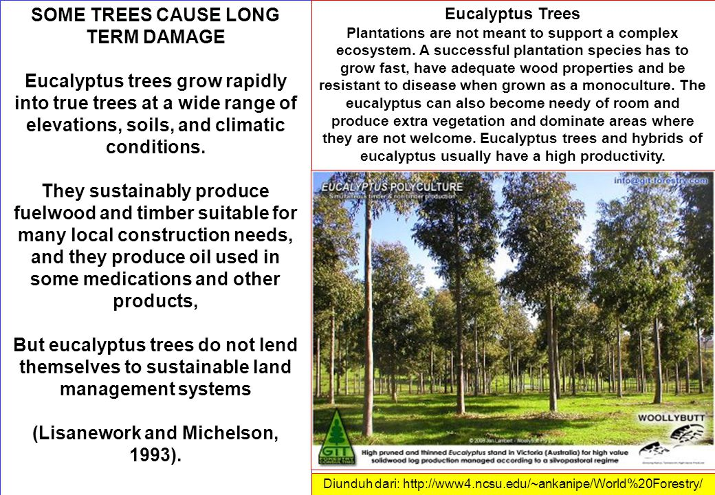 SOME TREES CAUSE LONG TERM DAMAGE Eucalyptus trees grow rapidly into true trees at a wide range of elevations, soils, and climatic conditions.