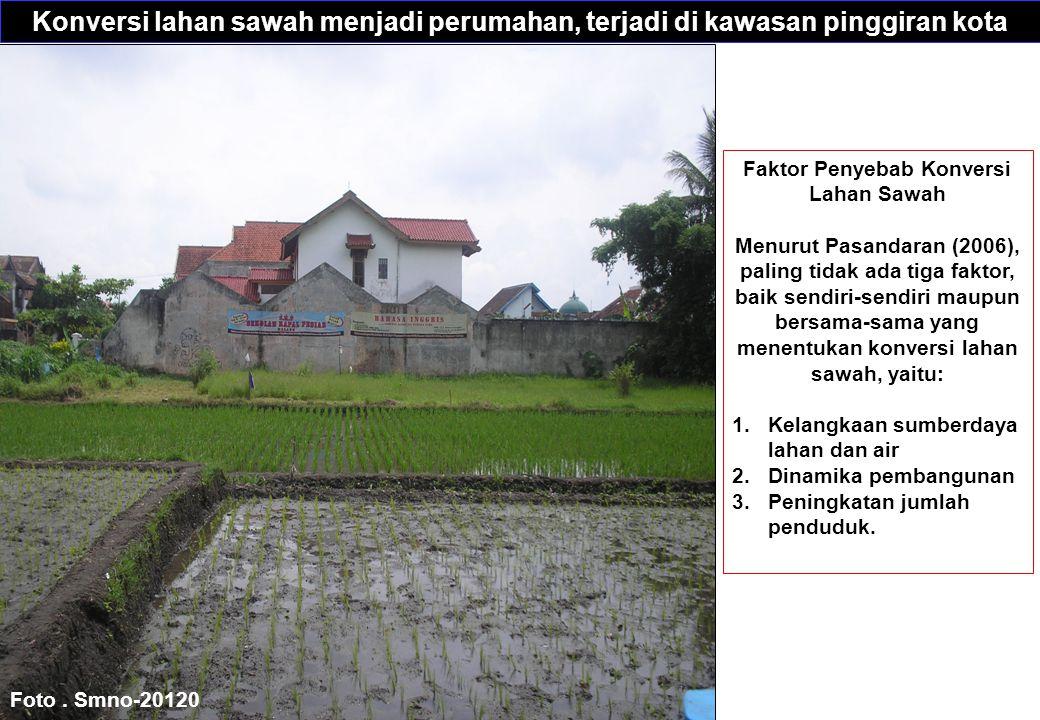 Konversi lahan sawah menjadi perumahan, terjadi di kawasan pinggiran kota Foto.